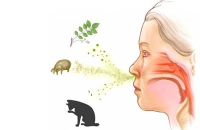 Внешние аллергены