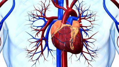 Воспаление мышцы сердца