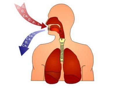 Механизм дыхания