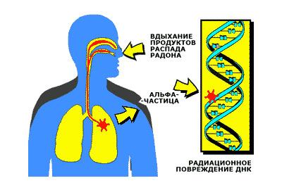 Влияние радиации на человека