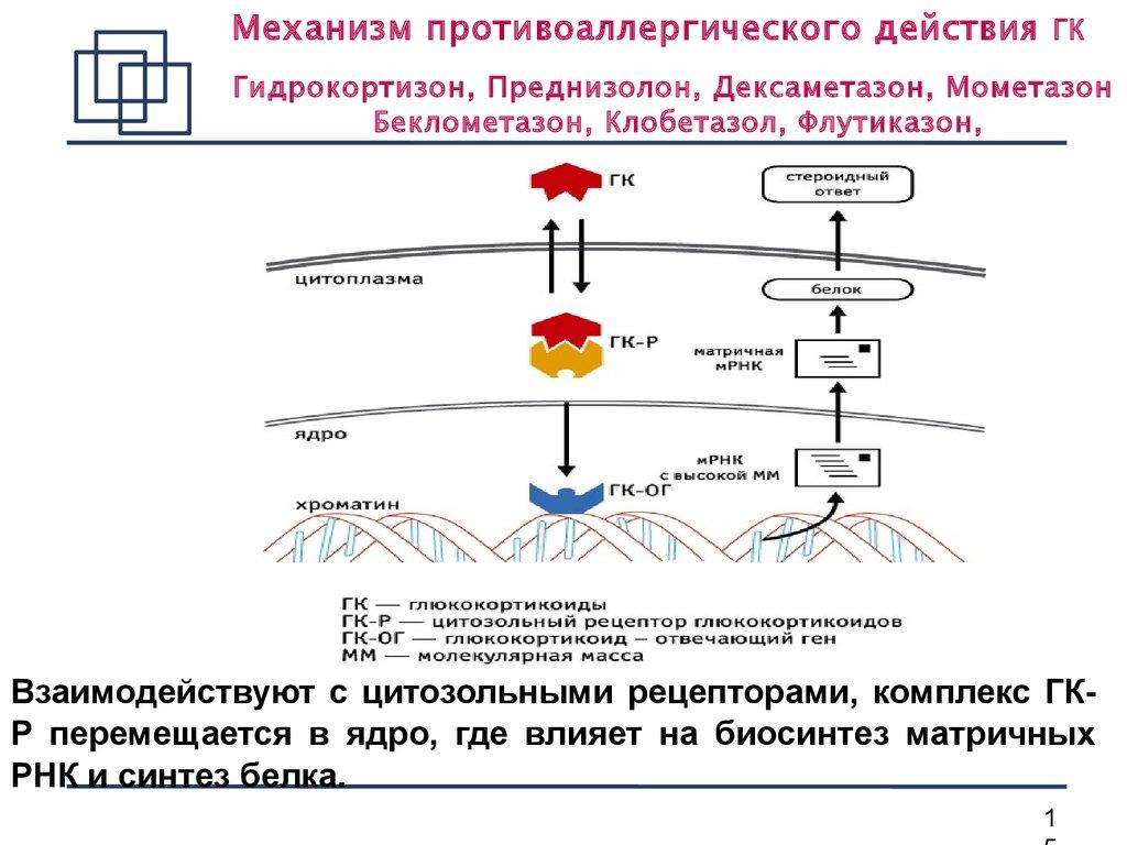 Механизм противоаллергического действия